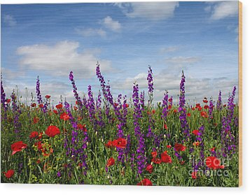 Flowers Of The Field Wood Print by Diana Kraleva