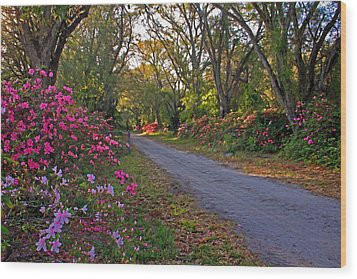 Flowers - Spring Fling Wood Print by HH Photography of Florida