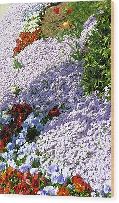 Flowing Phlox Wood Print by Jan Amiss Photography