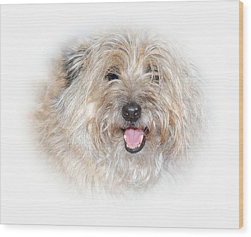 Wood Print featuring the photograph Fluff Pup by Debbie Stahre