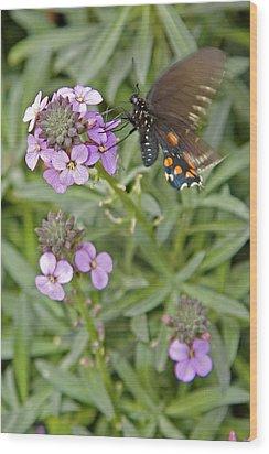 Fluttering Wood Print by Charlie Osborn
