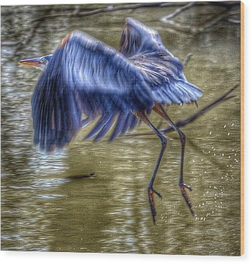 Fly Away Wood Print by Sumoflam Photography