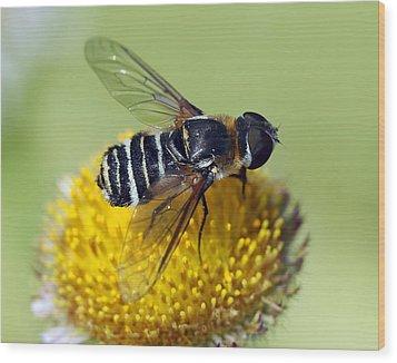 Fly On Flower Wood Print