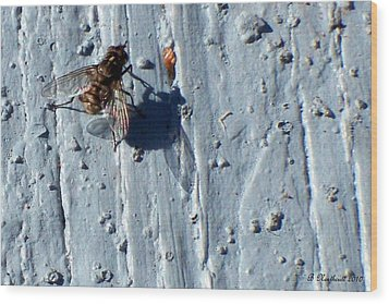 Wood Print featuring the photograph Fly On The Wall by Betty Northcutt