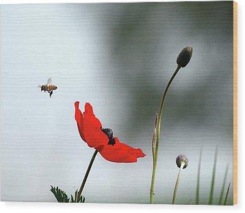 Flying Away Wood Print by Meir Ezrachi