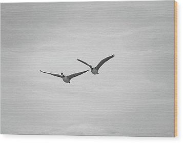 Flying Companions Wood Print