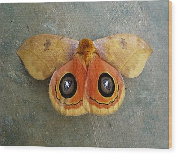 Flying Creatures No.1 Wood Print by Gregory Young