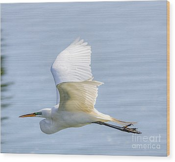Flying Heron Wood Print