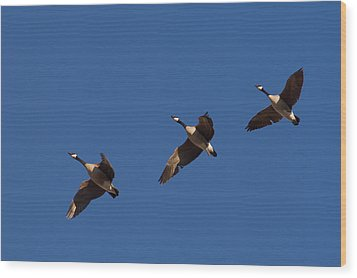 Wood Print featuring the photograph Flying In Formation by Monte Stevens