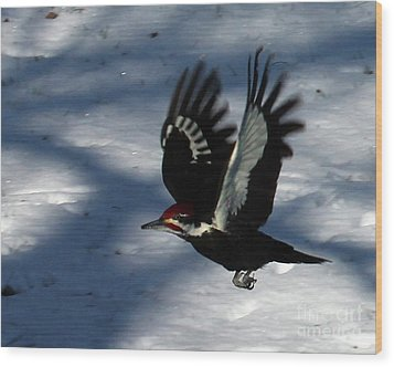 Flying Pileated Woodpecker Wood Print