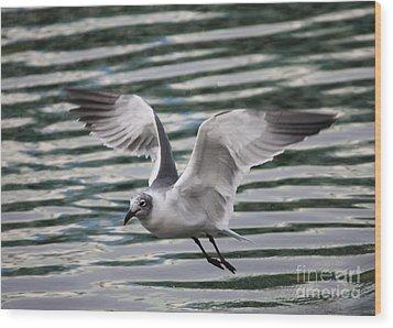Flying Seagull Wood Print by Carol Groenen