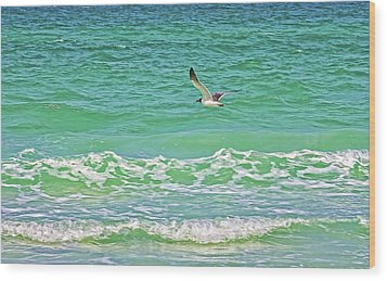 Flying Solo Wood Print by HH Photography of Florida