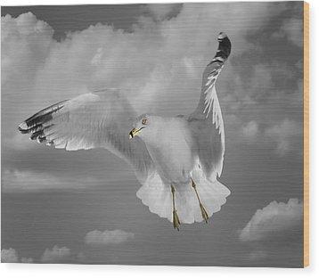 Flying Solo Wood Print by Steven  Michael