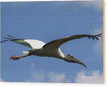 Flying Stork-no Baby Wood Print