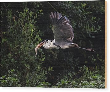 Wood Print featuring the photograph Flying With Lunch by Wade Aiken