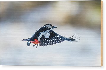 Wood Print featuring the photograph Flying Woodpecker by Torbjorn Swenelius