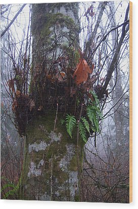 Fog And Ferns Wood Print by Ken Day
