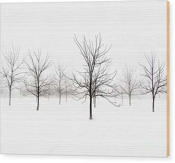 Fog And Winter Black Walnut Trees  Wood Print by Angie Rea
