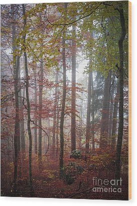 Wood Print featuring the photograph Fog In Autumn Forest by Elena Elisseeva