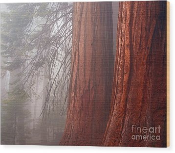 Fog In The Redwood Forest Sequoia National Park Wood Print by Nature Scapes Fine Art