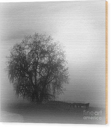 Fog Tree Wood Print by Barbara Henry
