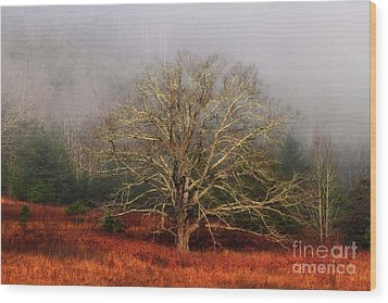 Fog Tree Wood Print
