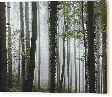 Foggy Forest Wood Print by Chevy Fleet