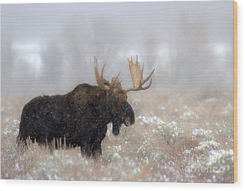Wood Print featuring the photograph Foggy Moose Silhouette by Adam Jewell