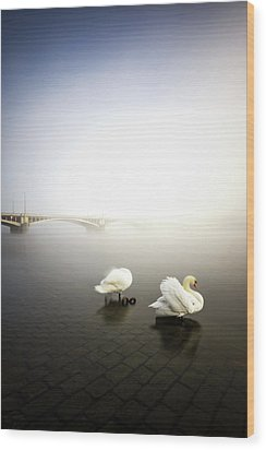 Foggy Morning View Near Bridge With Two Swans At Vltava River, Prague, Czech Republic Wood Print
