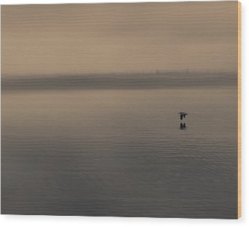 Wood Print featuring the photograph Foggy Pelican by Ron Dubin