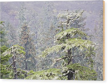 Foggy Tongass Rain Forest Wood Print by Eggers Photography
