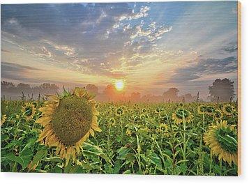 Foggy Yellow Fields Wood Print