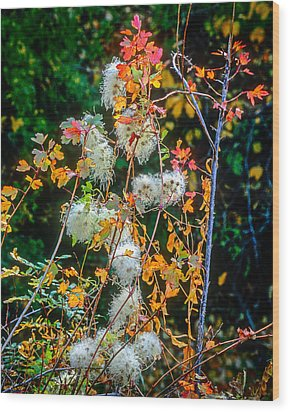 Foliage Twisted Colored Leaves Wood Print