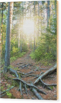 Follow Your Path Wood Print by Andrea Galiffi
