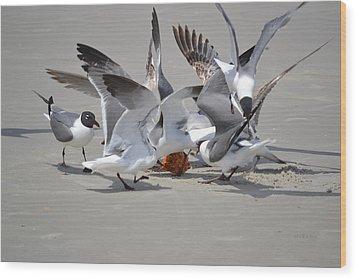Food Fight - Gulls At The Beach Wood Print