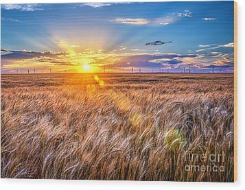 For Amber Waves Of Grain Wood Print by Jean Hutchison
