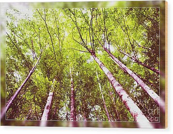 Wood Print featuring the photograph Forest 2 by Jean Bernard Roussilhe