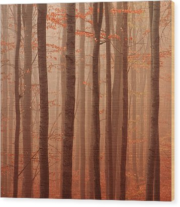 Forest Barcode Wood Print by Evgeni Dinev