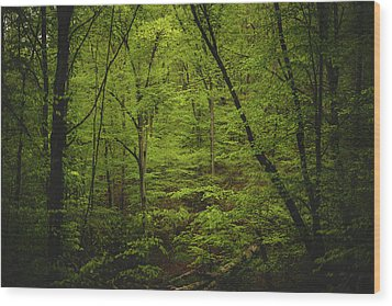Wood Print featuring the photograph Forest Beckons by Shane Holsclaw