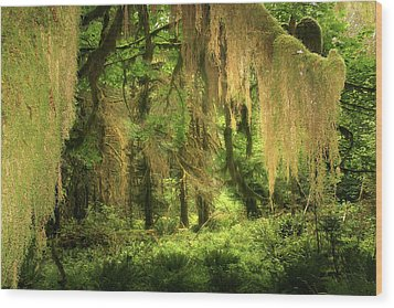 Forest Fantasy - Quinault - Gateway To Paradise On The Olympic Peninsula Wa Wood Print by Christine Till