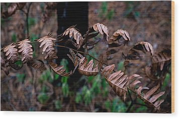 Forest Ferns Wood Print by Glenn DiPaola