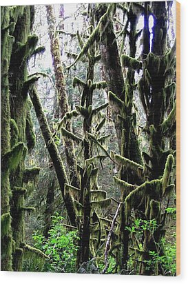 Forest Finery Wood Print by Will Borden