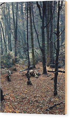 Fir Forest-1 Wood Print by Henryk Gorecki