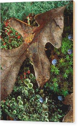 Forest Floor Detail Wood Print by Lloyd Grotjan