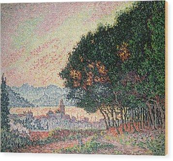 Forest Near St Tropez Wood Print by Paul Signac