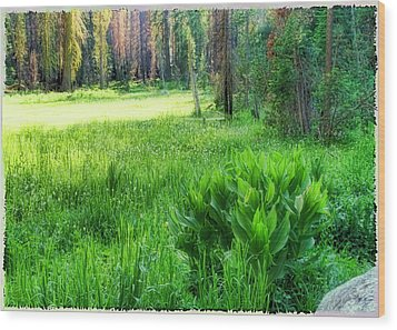 Forest Of Color Wood Print by Michael Cleere