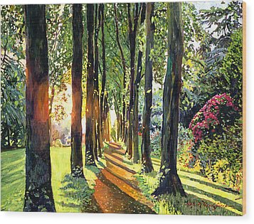 Forest Of Enchantment Wood Print by David Lloyd Glover