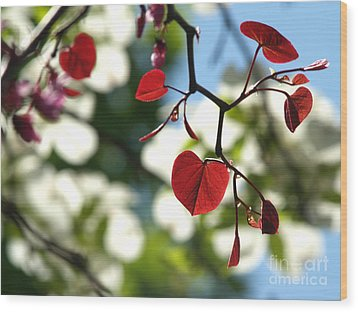 Forest Pansy Redbud Leaves In Spring Wood Print by Anna Lisa Yoder