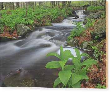 Forest Stream And False Hellabore In Spring Wood Print by John Burk