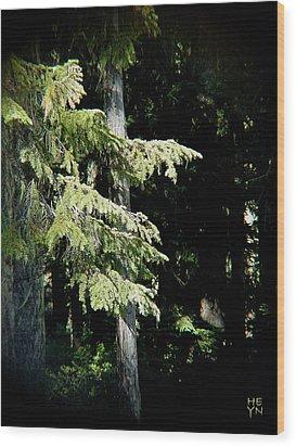 Forest Sunlight - 1 Wood Print by Shirley Heyn